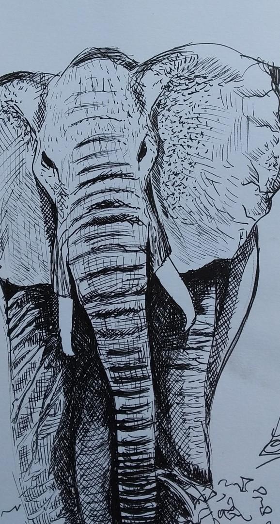 Sarah Bouzaglou Boissin - esquisse dessin éléphant
